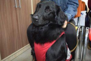 Собака-терапевт Мира